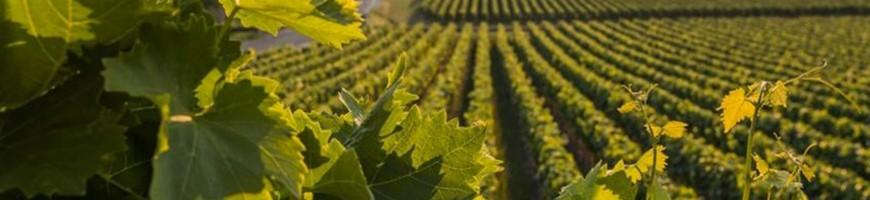 Acquista prodotti enologici e attrezzatura per vino online